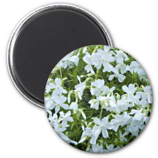 Cascading white flowers 2 inch round magnet