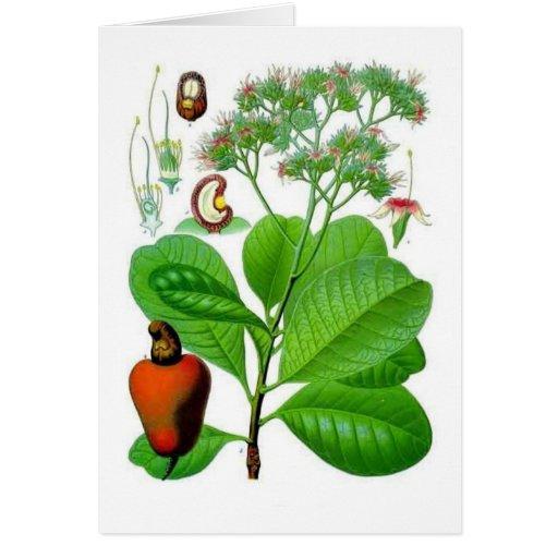 Cashew Greeting Card