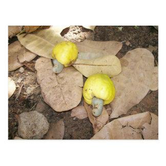 Cashew Fruits, Nigeria Postcards