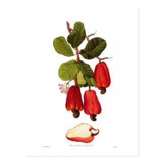 Cashew Post Cards