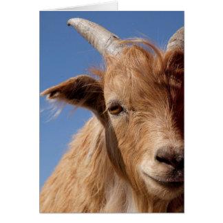 Cashmere Goat Portrait Card