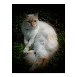 Caspar the cat postcard