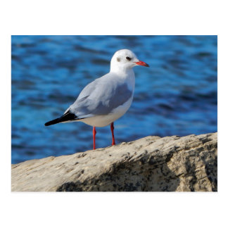 Caspian gull on background of the sea. postcard