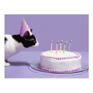 Casquette de port d'anniversaire de chat soufflant cartes postales