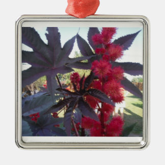 Castor Bean Christmas Ornament