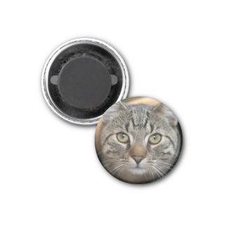 cat 1 inch round magnet