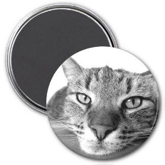 cat 3 inch round magnet