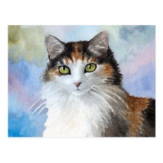 Cat 572 postcard