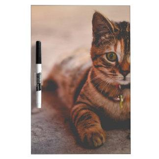 Cat-5 Dry-Erase Whiteboard