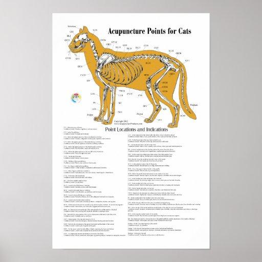 Cat Acupressure Acupuncture Points Chart
