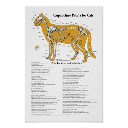 Cat Acupressure Acupuncture Points Chart