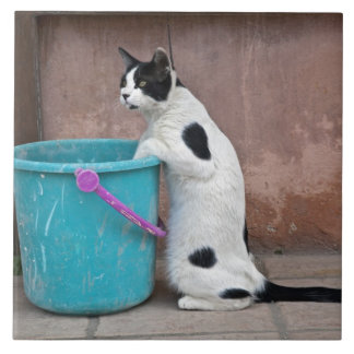 Cat and bucket, Chania, Crete, Greece Tile