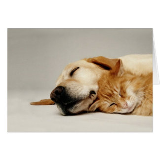 Cat and dog sleeping together... greeting card