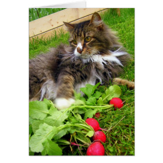 Cat and Gard Radishes / Birthday Greeting Card