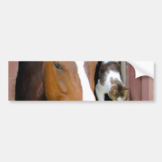 Cat and horse - horse ranch - horse lovers bumper sticker