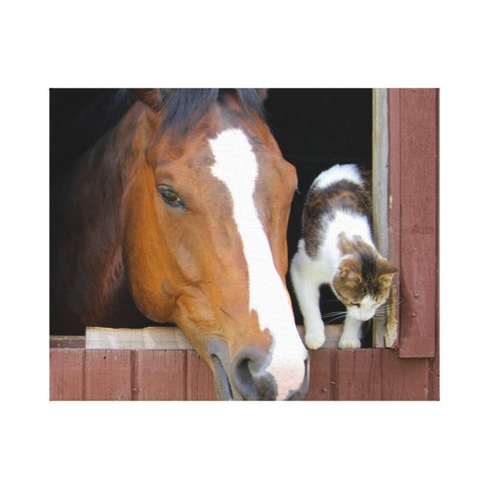 Cat and horse - horse ranch - horse lovers canvas print