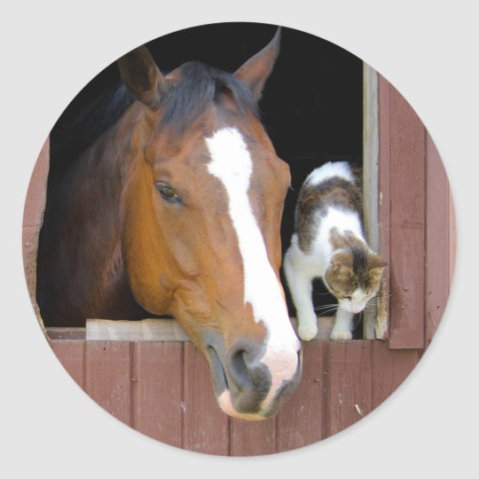 Cat and horse - horse ranch - horse lovers classic round sticker
