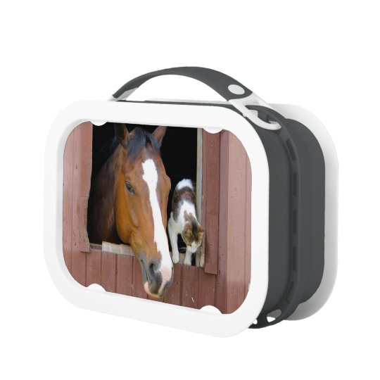 Cat and horse - horse ranch - horse lovers lunchbox