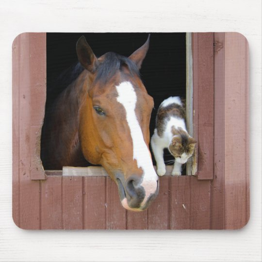 Cat and horse - horse ranch - horse lovers mouse pad