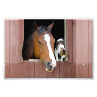 Cat and horse - horse ranch - horse lovers photo print