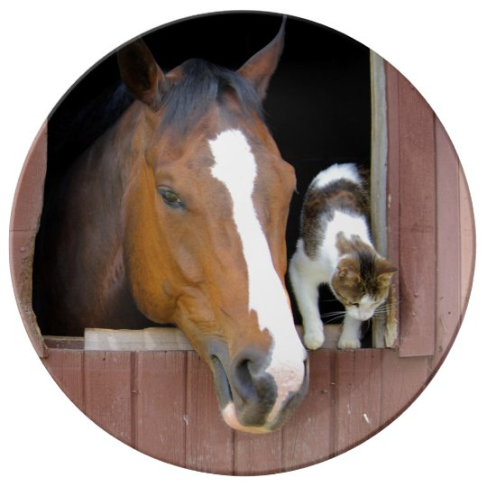 Cat and horse - horse ranch - horse lovers porcelain plate