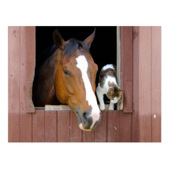 Cat and horse - horse ranch - horse lovers postcard