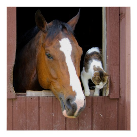 Cat and horse - horse ranch - horse lovers poster