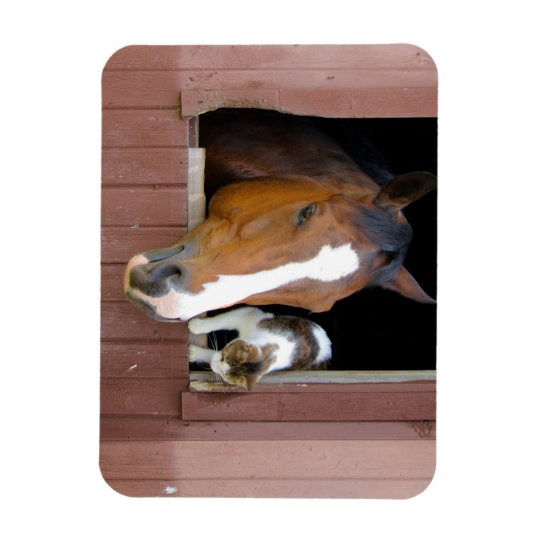 Cat and horse - horse ranch - horse lovers rectangular photo magnet