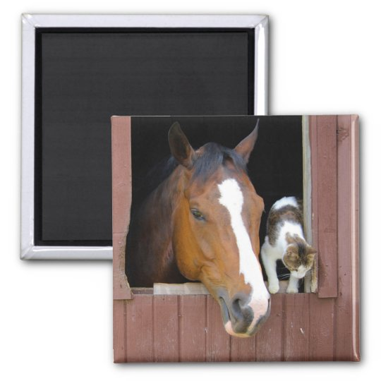 Cat and horse - horse ranch - horse lovers square magnet