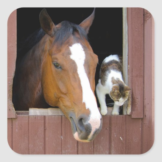 Cat and horse - horse ranch - horse lovers square sticker
