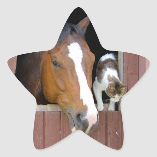 Cat and horse - horse ranch - horse lovers star sticker