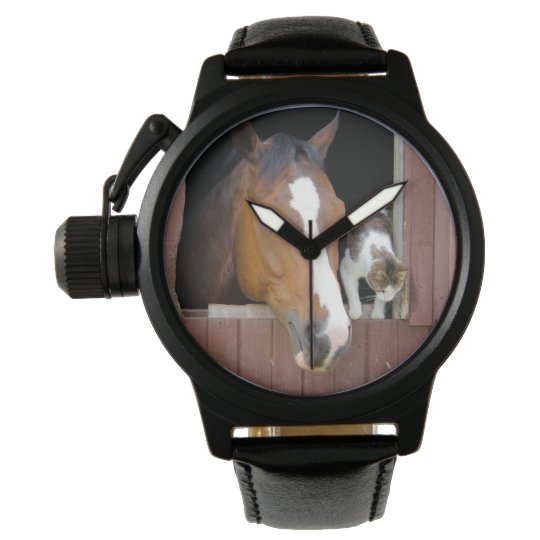 Cat and horse - horse ranch - horse lovers watch