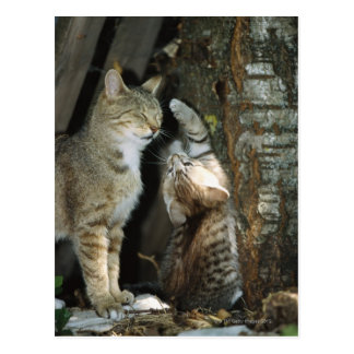 Cat and Kitten by Tree Postcard