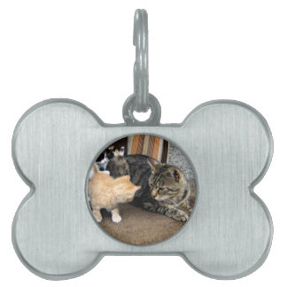 Cat and Kittens Staring at each other Pet Tags