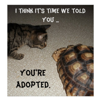 "Cat and Tortoise - ""You're Adopted"" Poster"