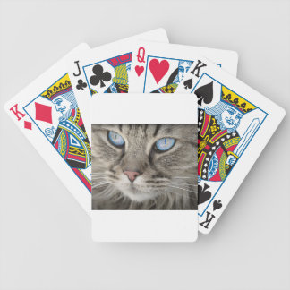 Cat Animal Cat Portrait Cat's Eyes Tiger Cat Bicycle Playing Cards