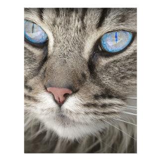 Cat Animal Cat Portrait Cat's Eyes Tiger Cat Letterhead