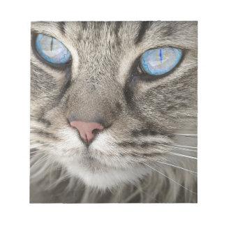 Cat Animal Cat Portrait Cat's Eyes Tiger Cat Notepad