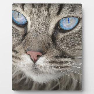 Cat Animal Cat Portrait Cat's Eyes Tiger Cat Plaque