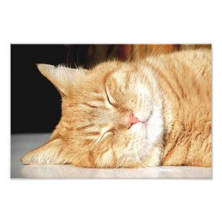 cat art photo