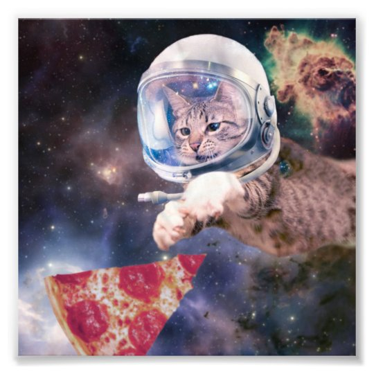 cat astronaut - funny cats - cats in space photo print