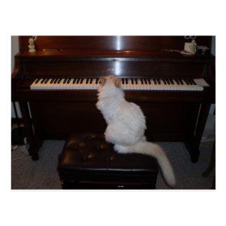 Cat at Piano Postcard