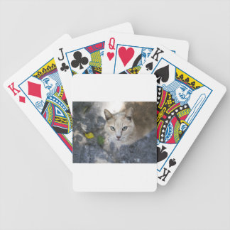 cat bicycle playing cards