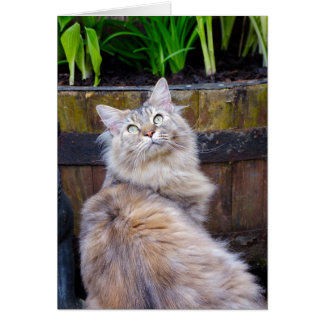 Cat, Blank Any Occasion, Note Card With Maine Coon