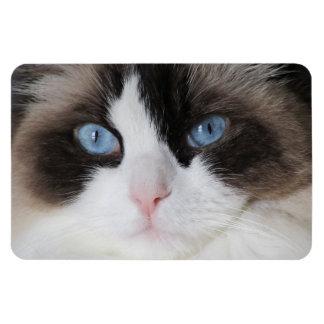 Cat Blue-Eyed Darling Magnet