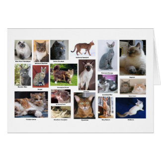 Cat Breeds Full Color Photo Greeting Card