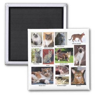 Cat Breeds Full Color Photo Magnets