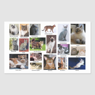 Cat Breeds Full Color Photos stickers