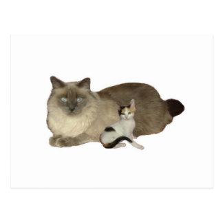 Cat Buddies Postcard