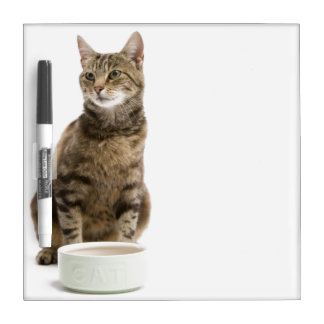 Cat by bowl dry erase board